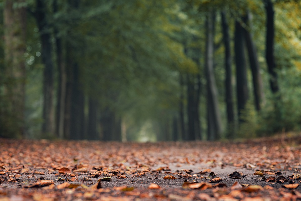 Autumn, Leaves, Trees, Forest, Nature, Colorful