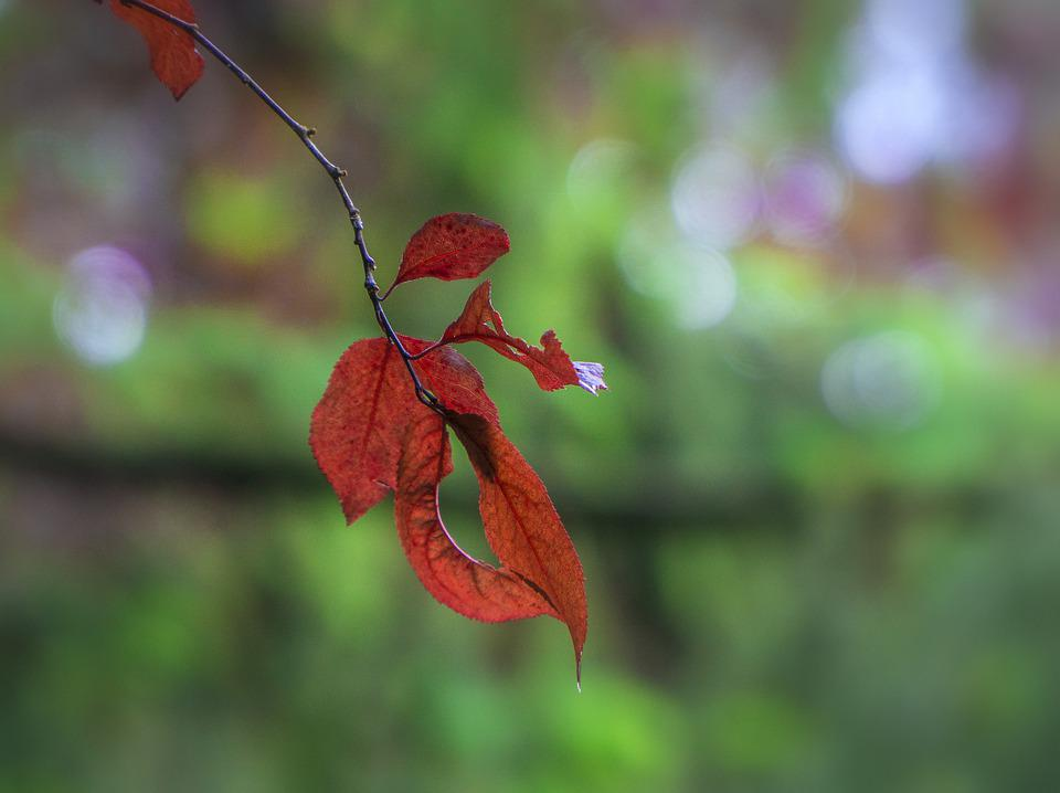 Leaves, Red, Autumn, Colorful, Season, Tree, Green