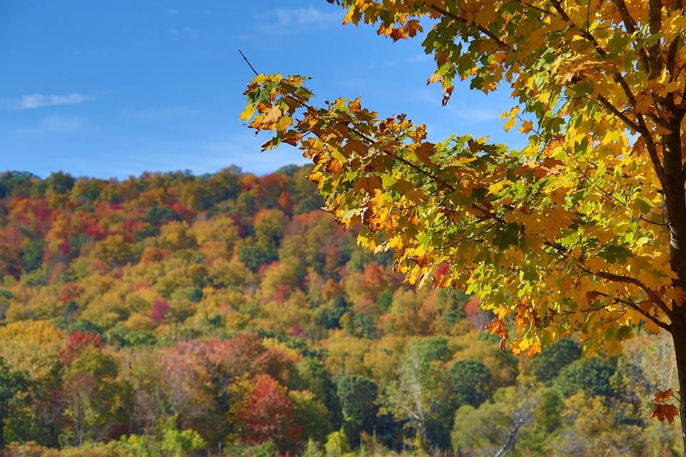 Foliage, Tree, Autumn, Colors, Nature, Trees, Colorful