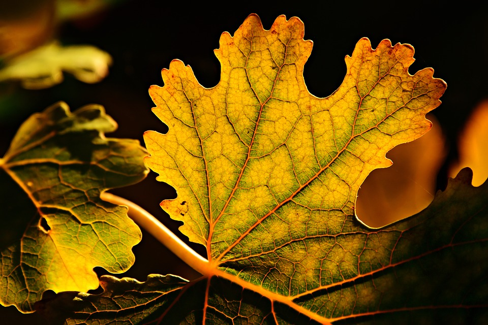 Leaf, Autumn Colors, Vein, Pattern, Structure, Twig