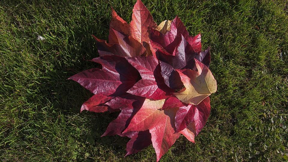 Foliage, Autumn, Mood, Autumn Leaves, Colors Of Autumn