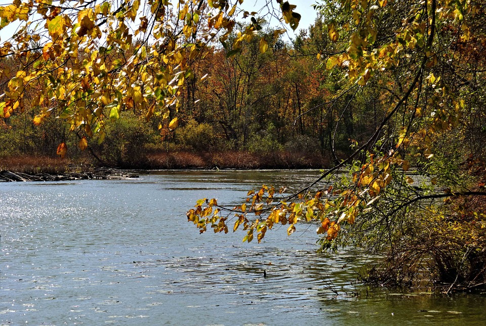 Autumn Colors, Inland Lake, Woods, Trees, Nature