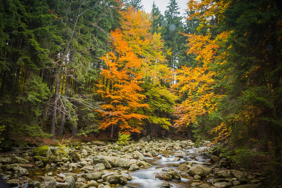 Autumn, Trees, Leaves, Nature, River, Colors