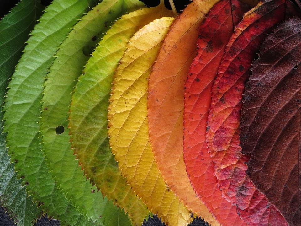 Autumn Leaves, Colourful, Autumn, Fall, Leaves