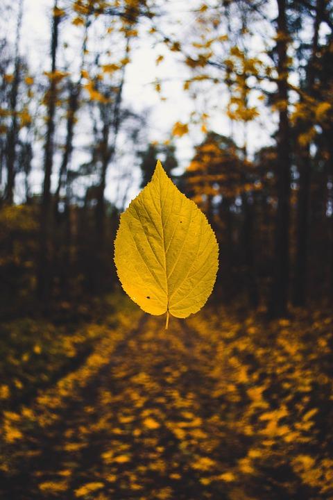 Autumn, Autumn Colours, Autumn Leaf, Autumn Leaves
