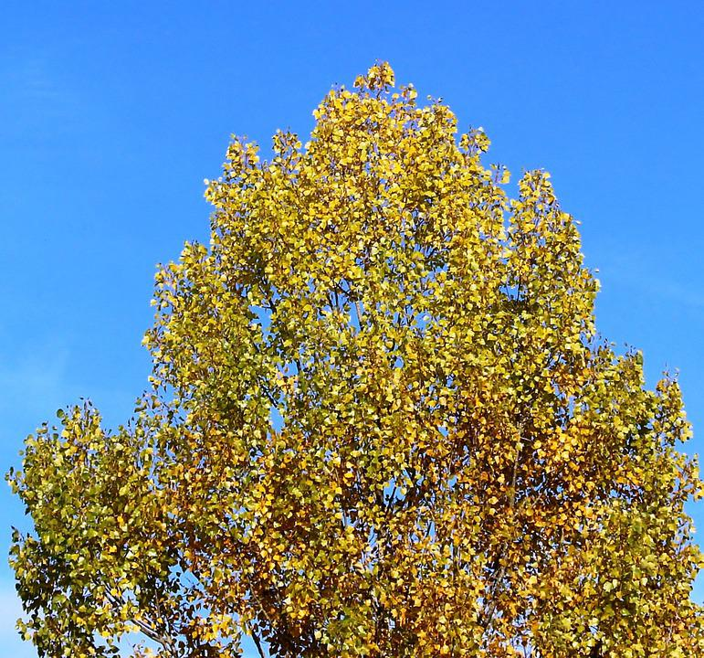 Tree, Crown, Autumn, Leaves, Autumn Colours, Sky