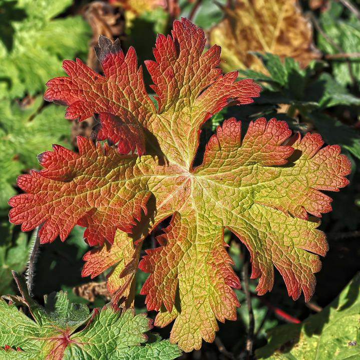 Autumn, Autumn Colours, Fall Leaves, Fall Color