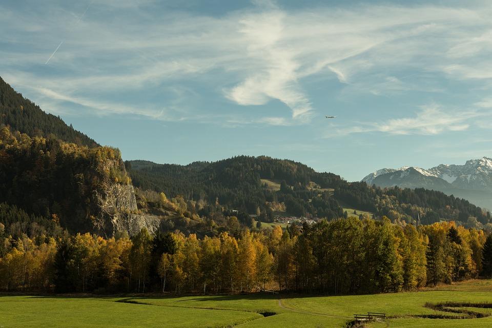Forest, Autumn, Autumn Colours, Autumn Forest, Nature
