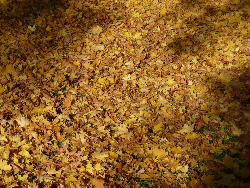 Fall Foliage, Fallen, Covered, Leaves, Autumn