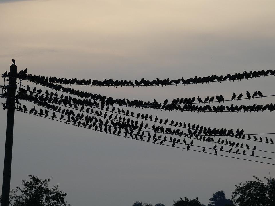 Birds, Autumn, Crow, Nature, Animal, Sky, Flying
