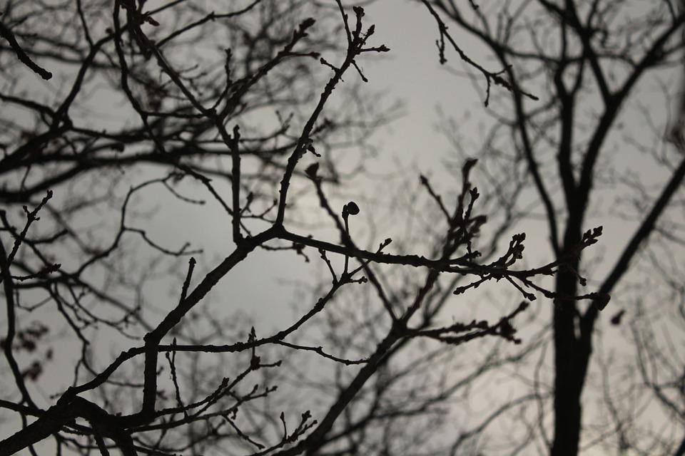 Tree, Dark, Autumn, Winter, Mysterious