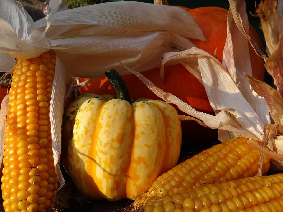 Autumn, Autumn Decoration, Thanksgiving, October, Gourd