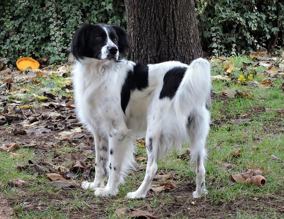 Dog, White, Nero, Pet, Autumn, Leaves, Garden, Laying