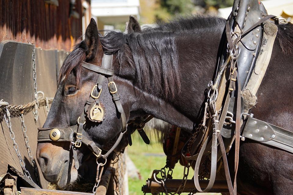 Horses, Eat, Coupling, Horse Head, Foot, Autumn
