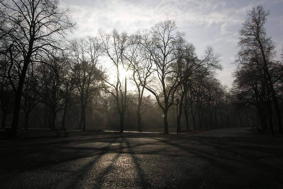 Park, Green, Emptiness, Nostalgia, Nature, Autumn, Tree