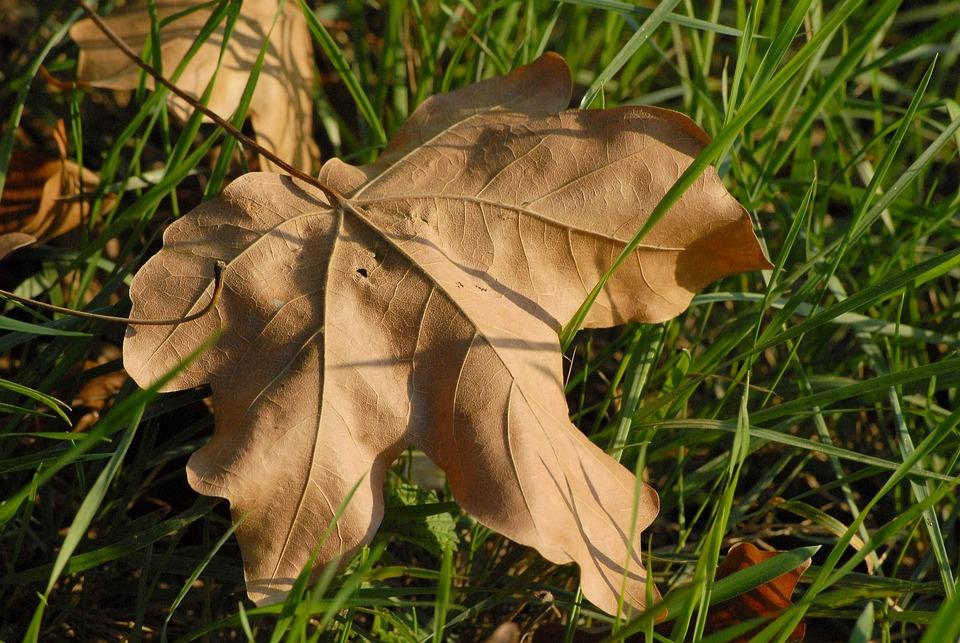 Autumn, Leaf, Fall, Brown