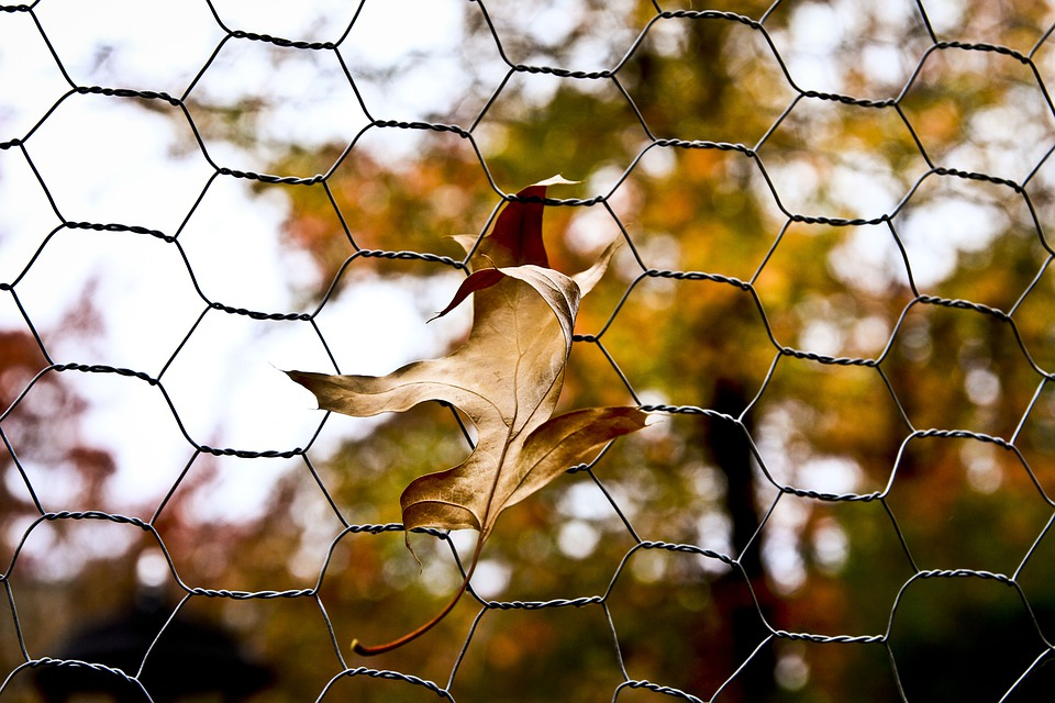 Free photo Autumn Fall Chicken Wire Fence Leaves Leaf - Max Pixel