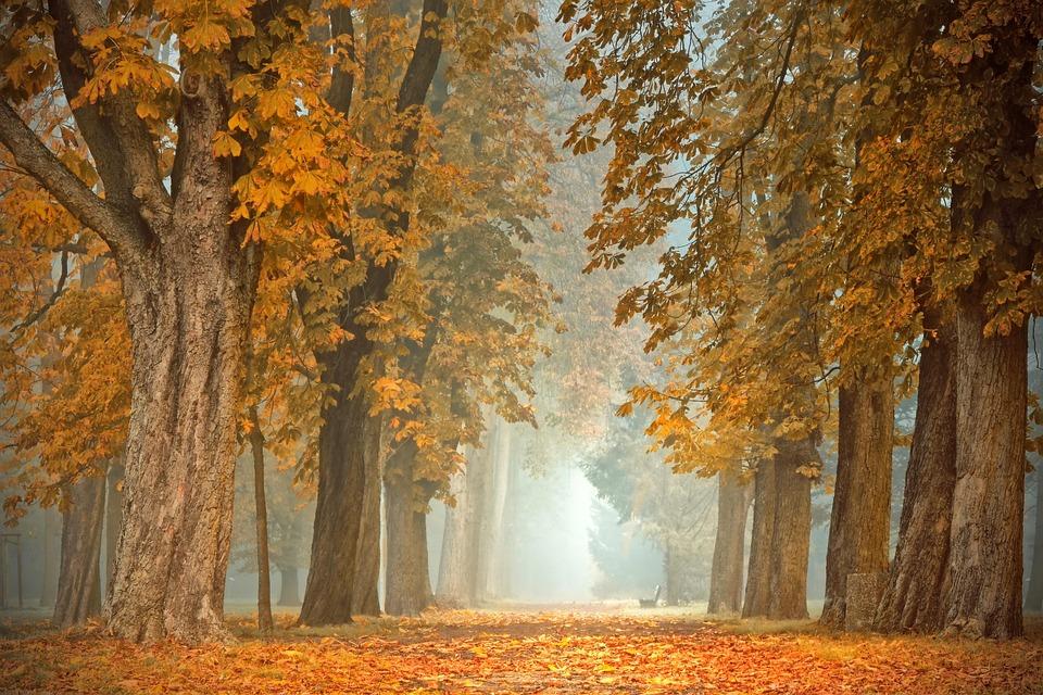 Avenue, Away, Trees, Chestnut, Fall Color, Autumn, Fog