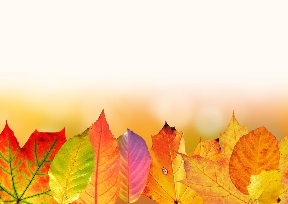 Autumn, Leaves, Colorful, Fall Foliage, Fall Color