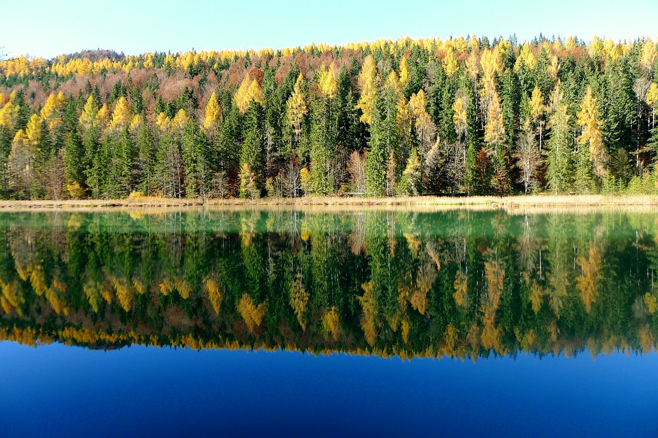 Autumn, Fall Color, Autumn Mood, Water Reflection