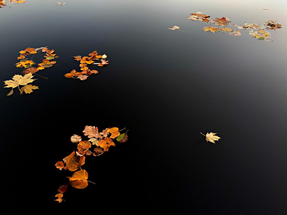 Autumn, Leaves On Water, Fall, Deep Waters, Nature