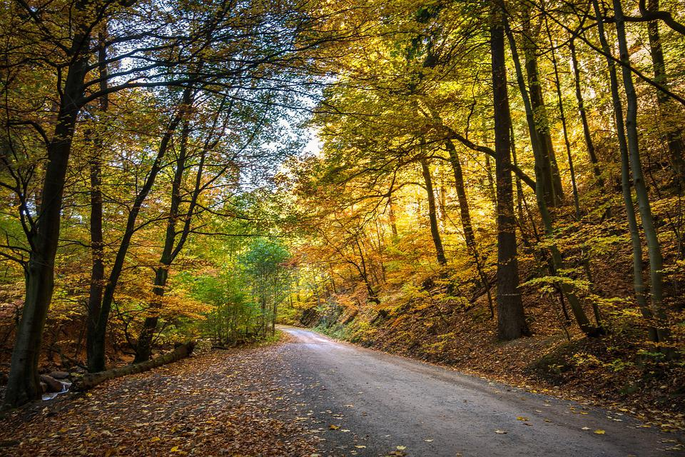 Forest, Fall Foliage, Forest Path, Autumn, Nature