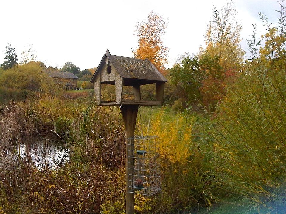 England, Great Britain, Landscape, Autumn, Fall, Plants