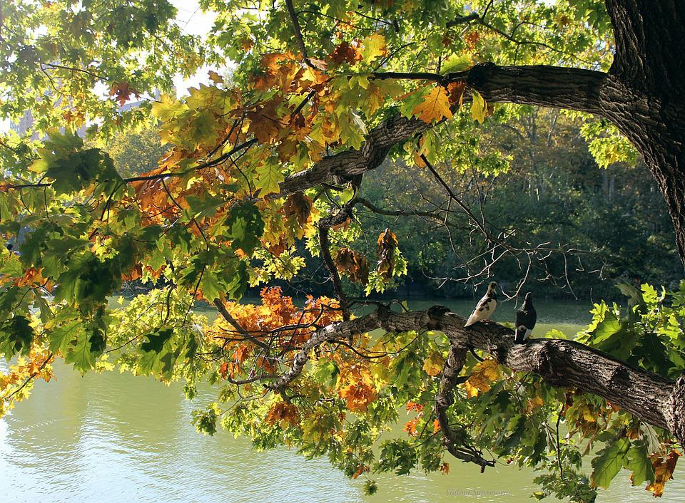 Tree, Leaves, Lake, Water, Fall, Nature, Branch, Autumn