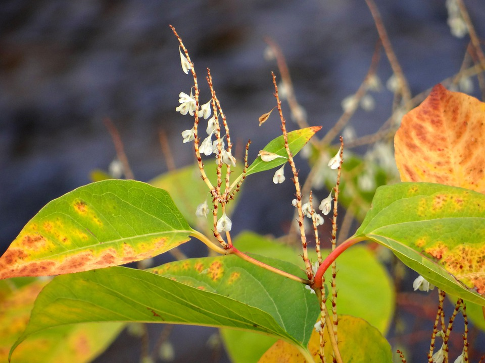 Nature, Small Flowers, Fall Leaves, Autumn, Leaves