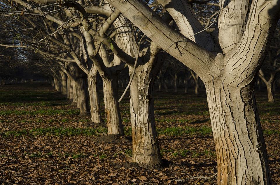 Orchard, Trees, Walnut, Nuts, Nature, Farm, Autumn