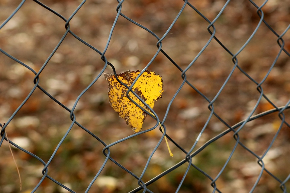 Feather, Autumn, Fencing, Yellow, Park, Leaf, Fall