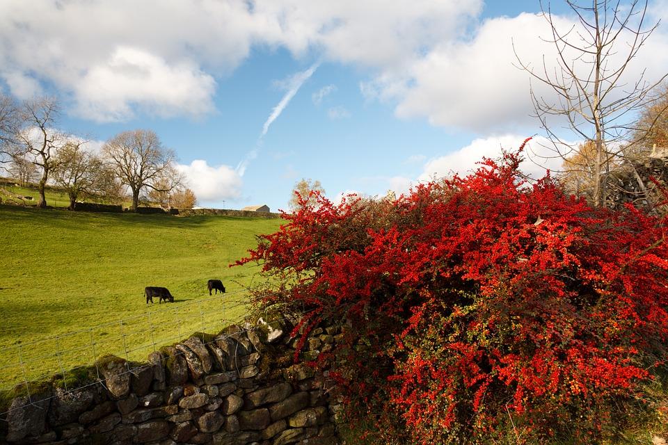 Autumn, Beautiful, Cloud, Colorful, Colors, Fall, Flora