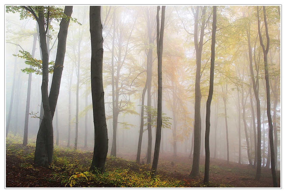Autumn, Fog, Forest
