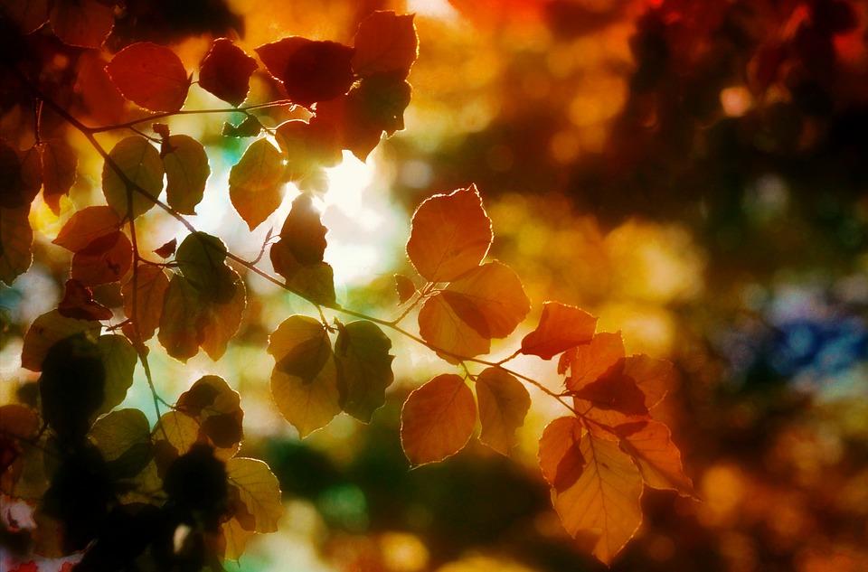 Autumn, Foliage, Light, Colors, Nature, Forest