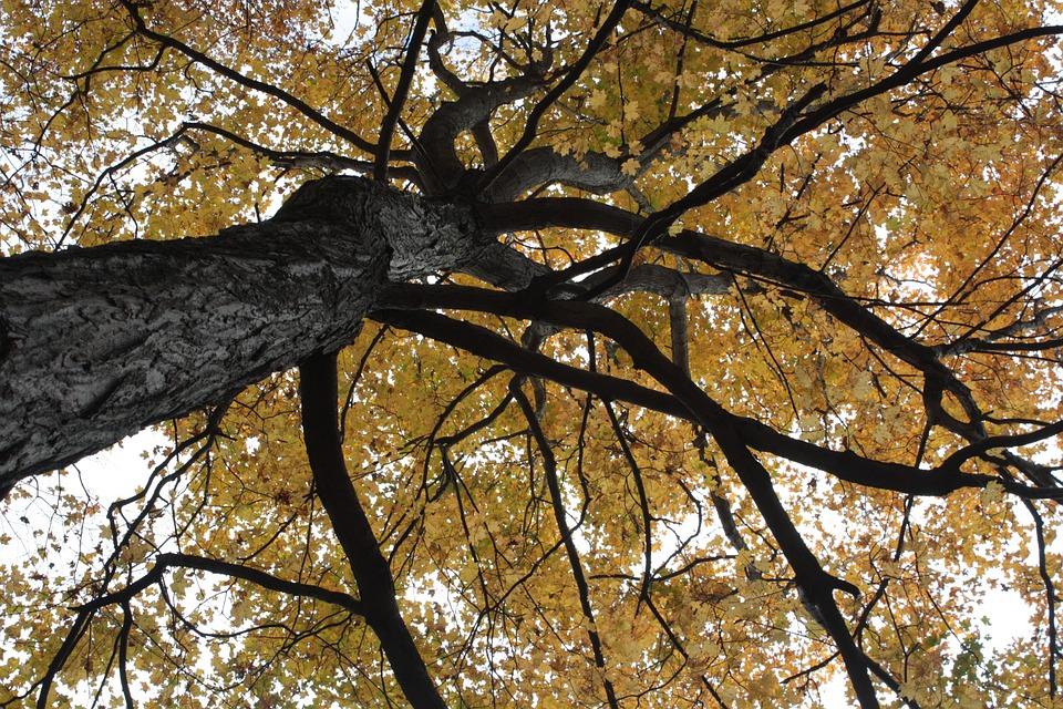 Foliage, Orange, Autumn, Leaves