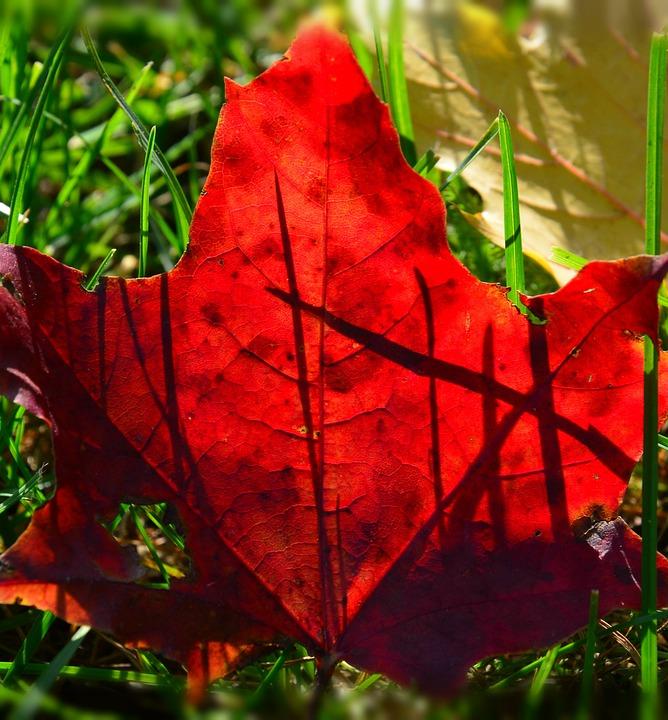 Foliage, Autumn, Red