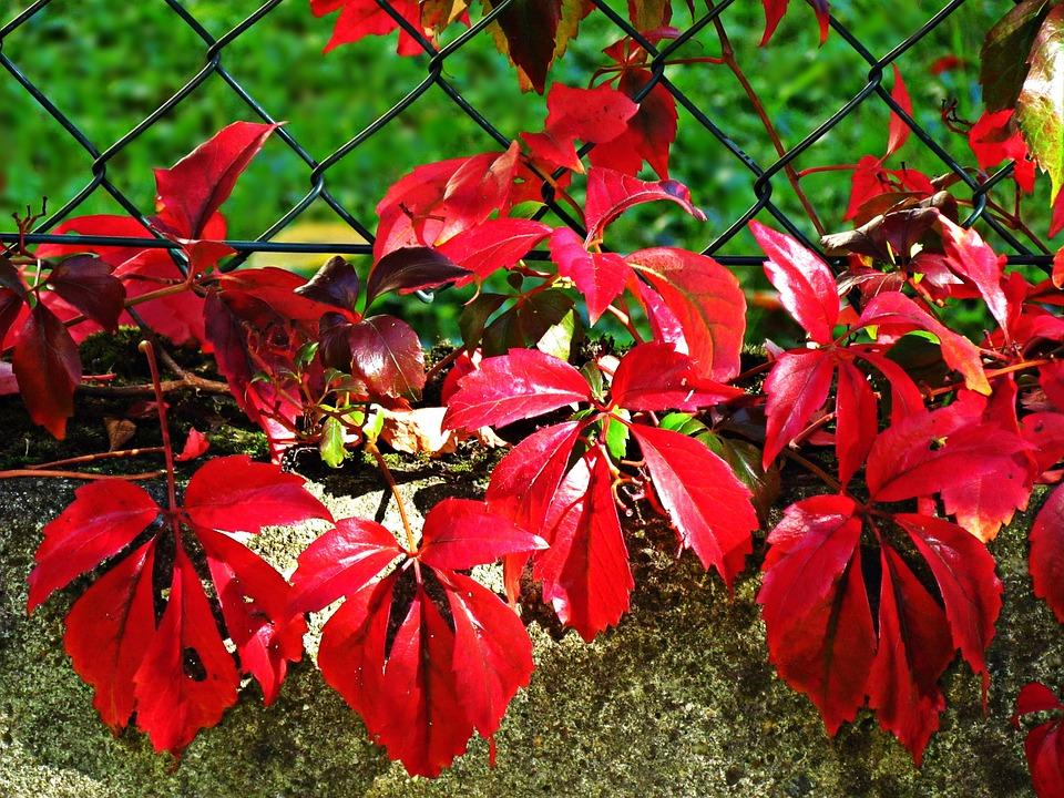 Autumn, Red, Purple, Foliage, Nature, Plant, Colors
