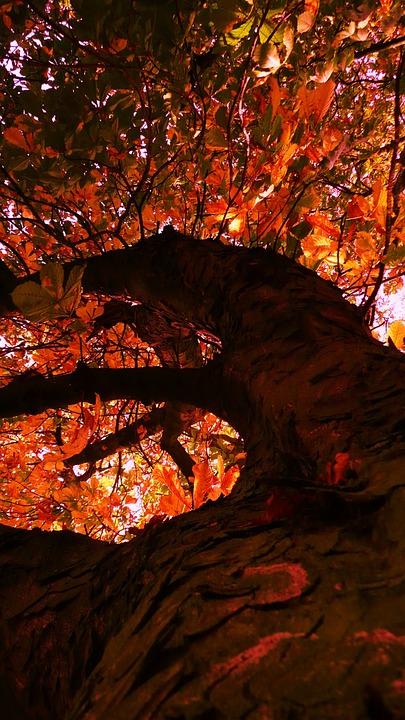 Tree, Autumn, Yellow, Leaves, Foliage, Environment