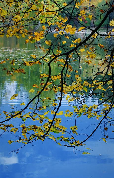Nature, Autumn, Water, Foliage