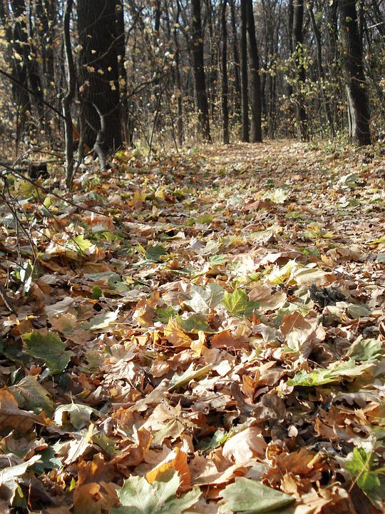 Forest, Forest Road, Autumn Forest, Autumn Leaves