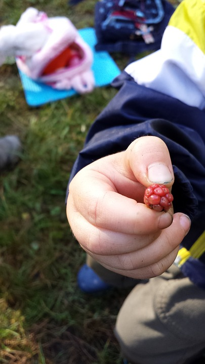 Blackberry, Autumn, Child, Nature Education, Forest