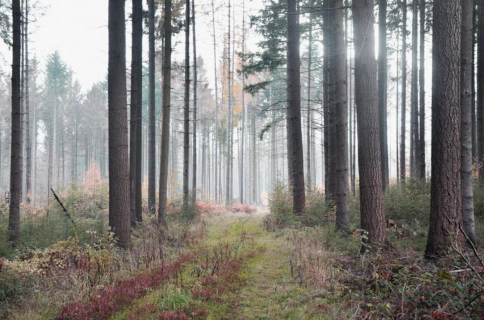 Forest, Nature, Landscape, Trees, Fog, Autumn, Secret