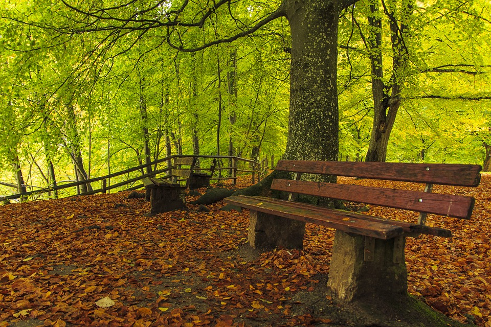 Forest Path, Autumn, Fall Leaves, Autumn Forest