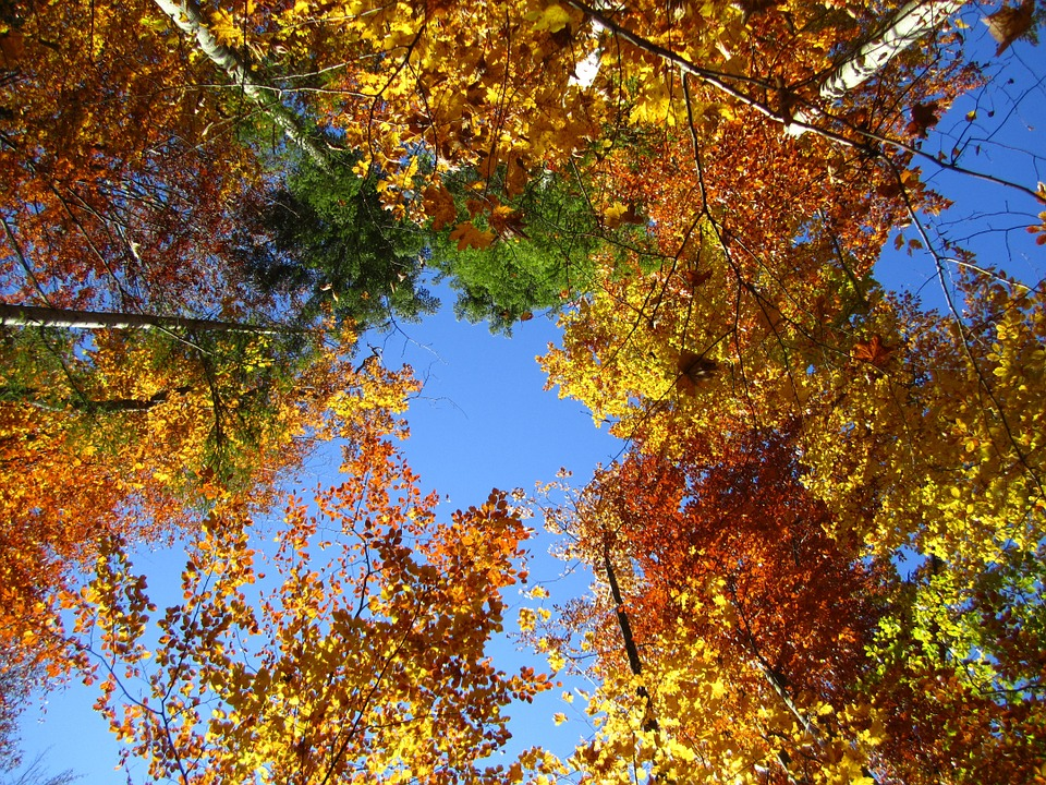 Tree, Forest, Autumn, Landscape, Aesthetic, Leaves