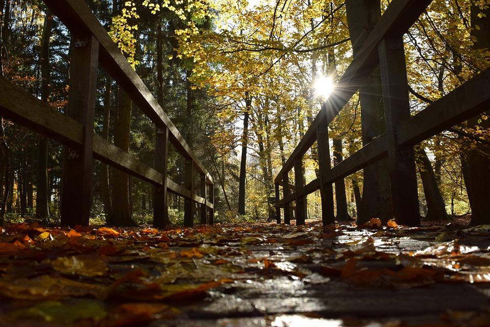Autumn, Bridge, Leaves, Forest, Wooden Bridge