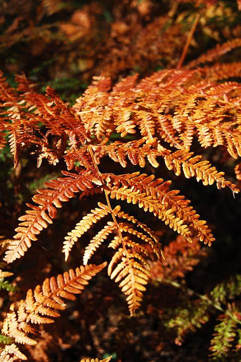 Ferns, Fronds, Leaves, Autumn, Foliage, Green, Greenery