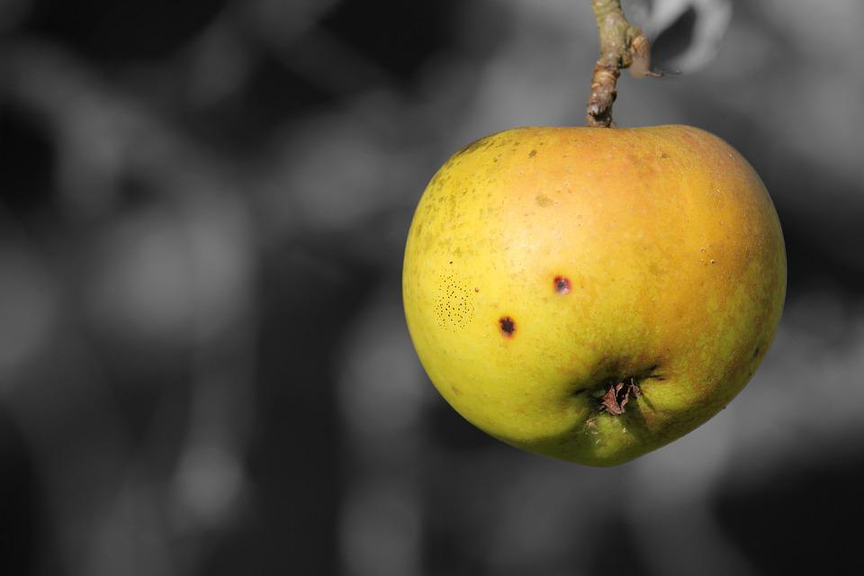 Fruit, Food, Nature, Autumn