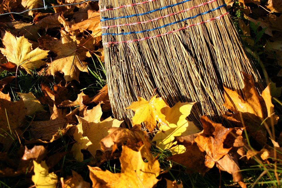 Yellow Leaves, Autumn Gold, Autumn, Foliage, Broom
