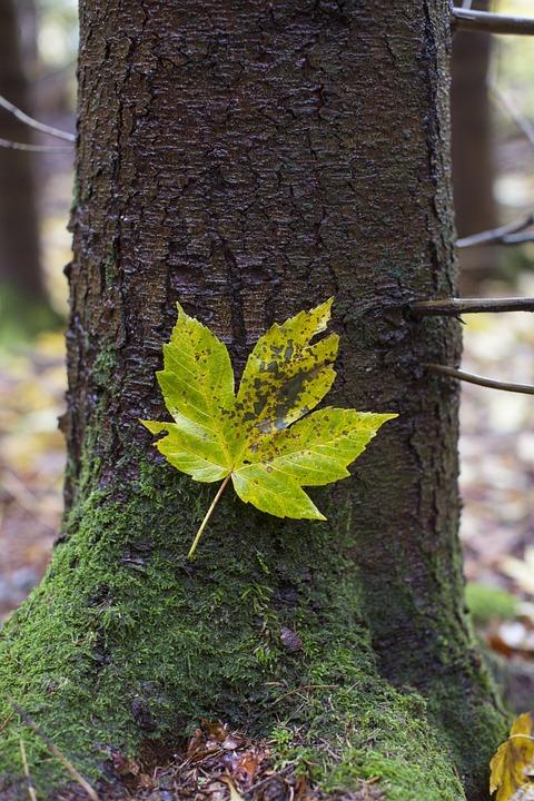 Autumn, Leaf, Fall Foliage, Golden Autumn, Nature