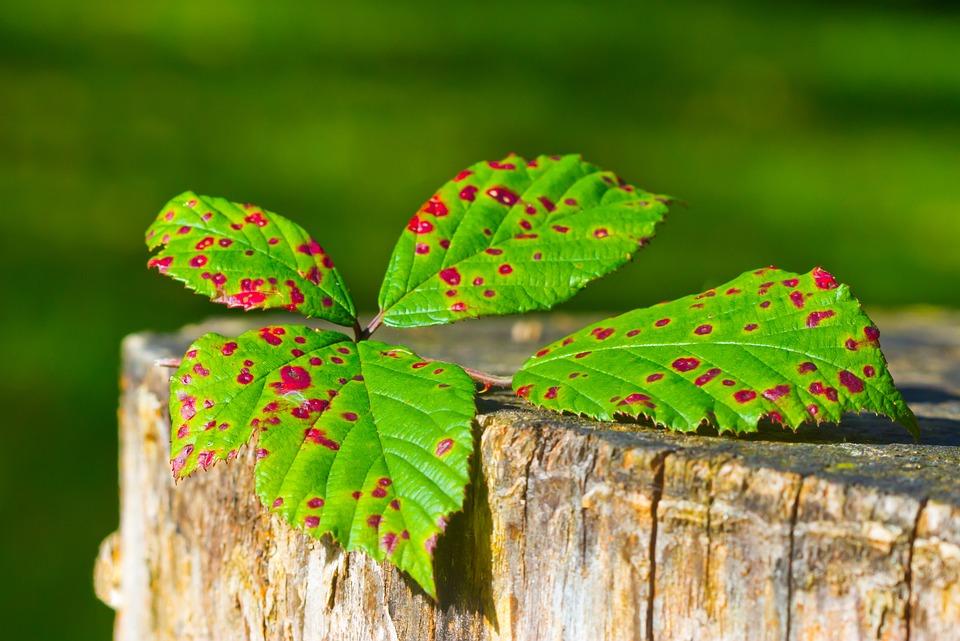 Autumn, Leaf, Leaves, Golden Autumn, Fall Foliage